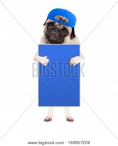 cute pug puppy dog with cap standing up holding blank blue sign and giving a like with thumb isolated on white background