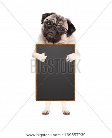 cute pug puppy dog with glasses standing up holding blank blackboard sign and giving a like with thumb isolated on white background