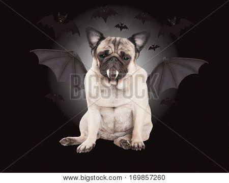 creepy cute pug puppy dog dressed up as bat for Halloween