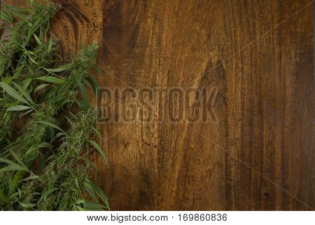 closeup of flowering Cannabis sativa weed plants on wooden background with copy space