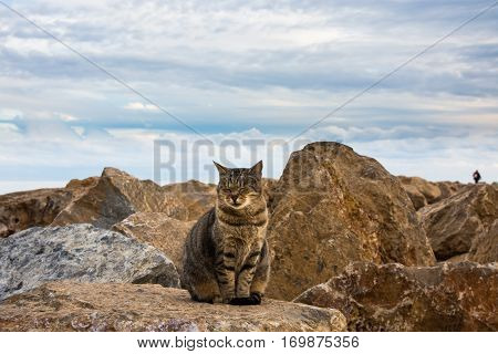 Wild tabby cat posing full face at the sea rocks on a fall afternoon, Mediterranean