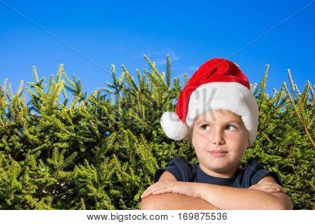 Very handsome eight years old boy in a red cap of Santa Claus smiling. Background - green hedge firs