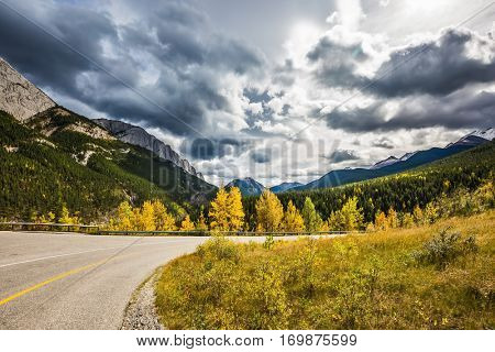 The magnificent Rocky Mountains in Canada. Gorgeous stormy sky in October. Yellowed slender aspens near the road adjacent to the green spruce