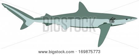 Vector Shark Fish lives is ocean and under deep blue water life one of top sea predators