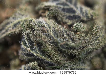 Abstract macro detail of cannabis bud from