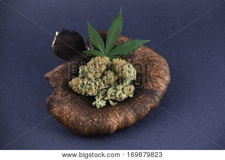 Detail of cannabis buds arrangement (mango puff strain) with pot leaf - medical marijuana concept
