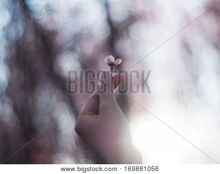 Sakura flower on mini heart finger over blurry sakura tree background with flare sunlight vintage and soft style.