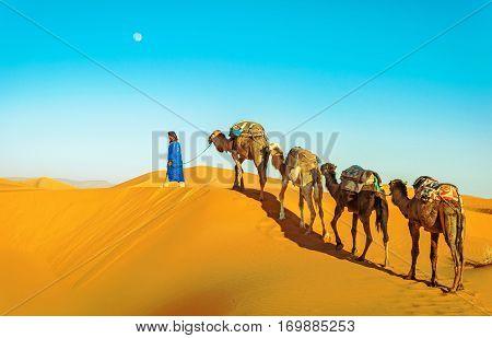 Camel caravan going through the sand dunes in the Sahara Desert. Morocco Africa. Beautiful sand dunes in the Sahara desert. poster