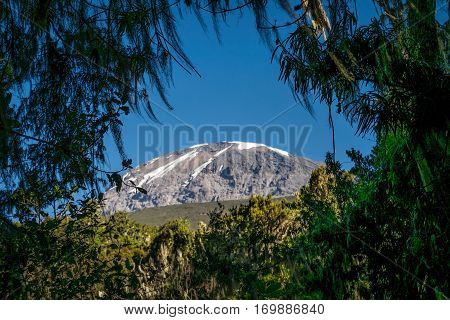 Kilimanjaro Taken From Rain Forest, Tanzania