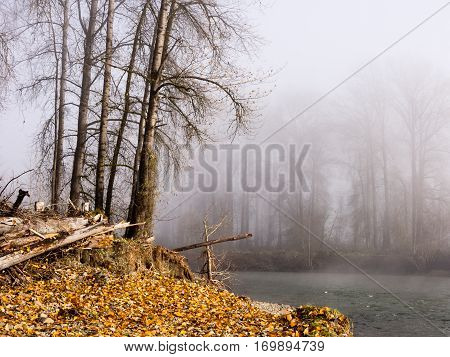 Autumn trees in fog on the banks of Snoqualmie river - near the town of Carnation, WA, USA