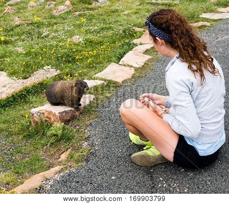 Rocky Mountain National Park USA - July 14 2015: Girl having an encounter with wild marmot in Rocky Mountain National Park
