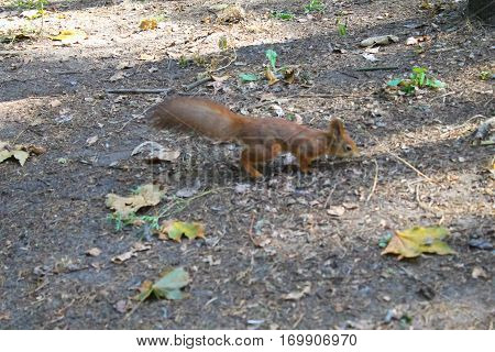 Squirrel in the city park on autumn