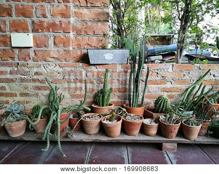Cactus garage garden at home with blur boken background home and office gardening weekend hobby