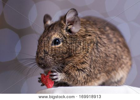 rodent holding red heart in its paws