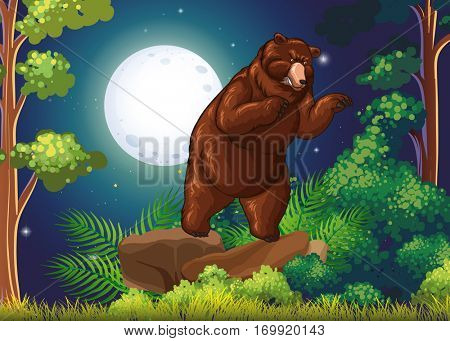 Wild bear in the jungle at night illustration
