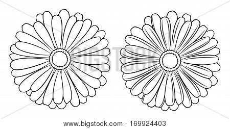 Floral vector set of outline chamomile, marguerite and daisy for design on white background. Illustration in black.