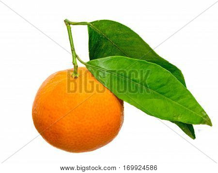The mandarin orange (Citrus reticulata) also known as the mandarin or mandarine isolated white background.