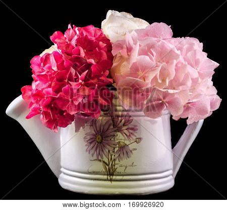 White Water Can With Hydrangea, Hortensia Flowers, Close Up, Isolated, Black Background