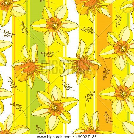 Vector seamless pattern with outline narcissus or daffodil flower in orange and yellow on the striped background. Floral background with narcissus for spring design in contour style.