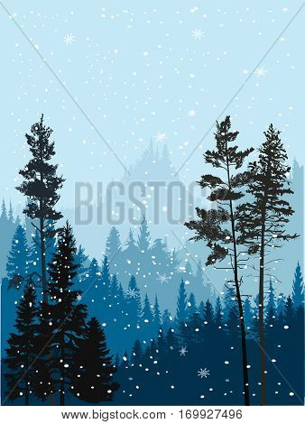 illustration with winter fir forest in snow hills
