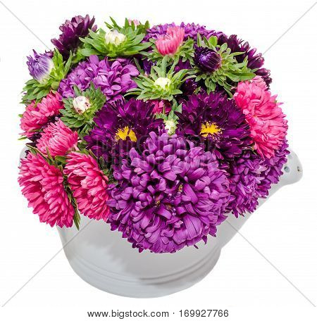 Vivid Colored Callistephus Chinensis Flowers, Common Names Include China Aster And Annual Aster, In