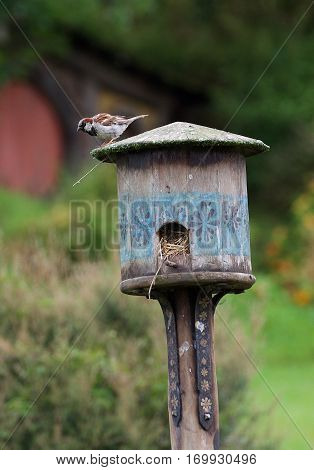 One little sparrow sitting on wooden nesting-box in nature background