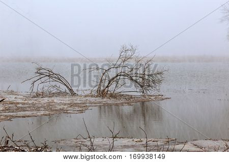 Snowfall over the river. Winter misty cloudy snowy weather. Cane and grass under snow and frost on a riverbank.