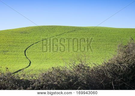 Typical Tuscan hill against a blue sky with copy space