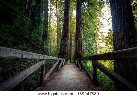 Image of a forest bridge in Redwood National Park, California.