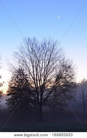 Crescent moon rising at dusk over foggy field and trees