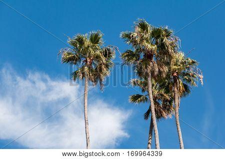 Palmeras y cielo con nubes, en Santa Mónica Beach