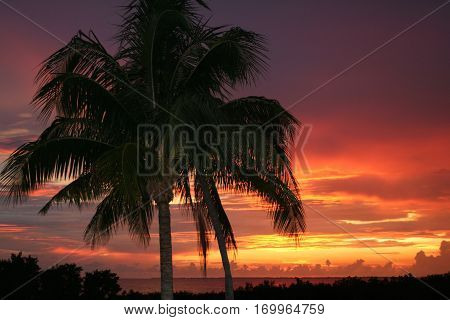 Palm tree i n front of red orange purple Sunset in fort myers beach florida