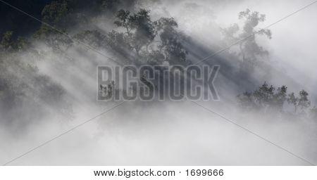 Foggy Majesty (0131)