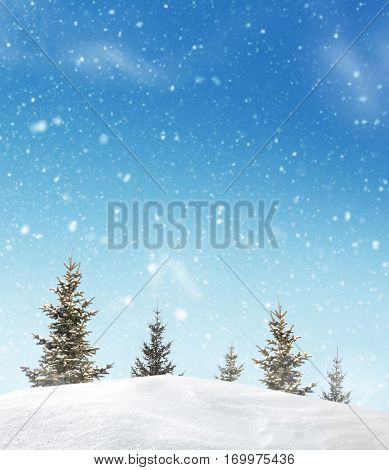 Winter landscape with fir trees.Merry Christmas and happy New Year greeting background