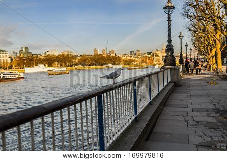 bird standing on a railing on the banks of the river in the background the city