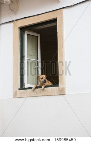 Sad dog looking out of the house window