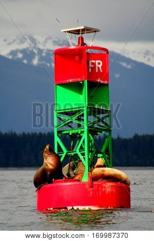 Sea Lions enjoying a spring day on an Alaska buoy