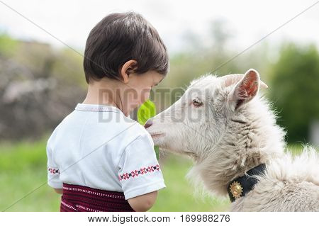 little boy in the Ukrainian national clothes feeding a goat
