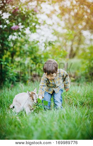 little boy feeds the goat with leaves the farm