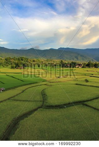 A ricefield in the Province NAN in the north of Thailand in Thailand.