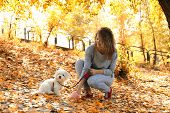 Woman gathering dog poo in park poster