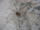 A big spider on a wall of stones poster