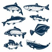 Fishes vector isolated icons of herring, pink or humpback salmon, navaga or saffron cod and carp, flounder and perch, sheatfish or catfish. Blue fish symbols set for seafood restaurant sign, fishing club or fishery industry, fish market or shop poster