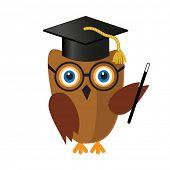 Cute wise owl in mortar board hat