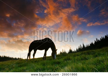 beautiful horse silhouette on a sunset background