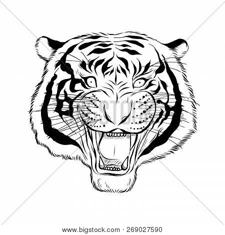 Hand Drawn Head Of Tiger, Vectorial Isolated Elements Vector Illustration Henna Mandala Zentangle St