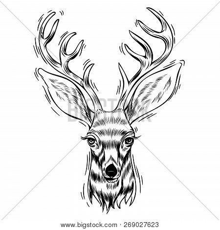 Hand Drawn Portrait Of Deer, Vectorial Isolated Elements Vector Illustration Henna Mandala Zentangle