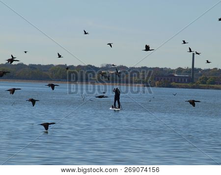 A Paddle Boarder Entering A Gray Area Under Migratory Bird Protection Act, Is Caught In The Middle A