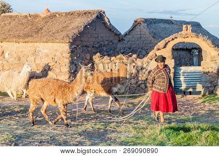 Puno, Peru - May 14, 2015: Small Settlement Near Puno, Peru. Old Women With Lamas Present
