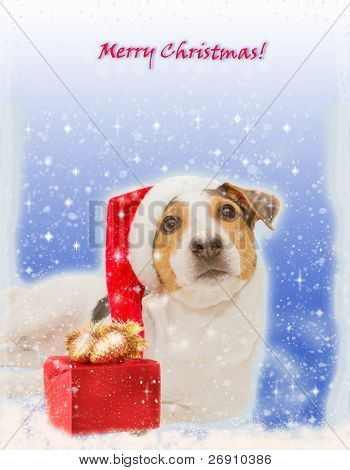 christmas postcard with funny dog and gift